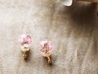 ドライフラワーの花珠イヤリング【e】の画像
