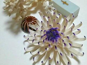 菊のコサージュの画像