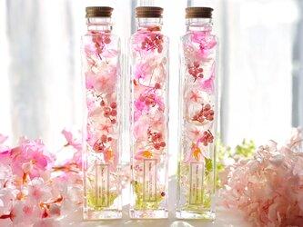 桜咲くうららかな春のハーバリウム -Lサイズ-の画像