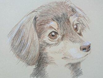 ペットの似顔絵  色鉛筆の画像