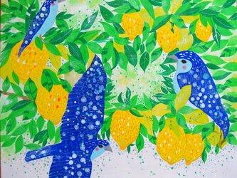 しあわせのレモンの画像