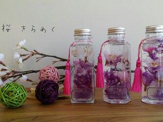 桜 ハーバリウム♬の画像