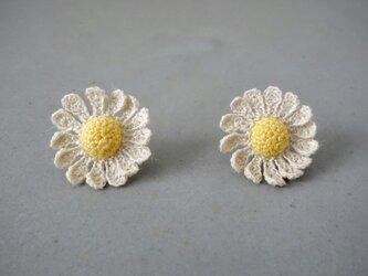 chamomile flowerの画像