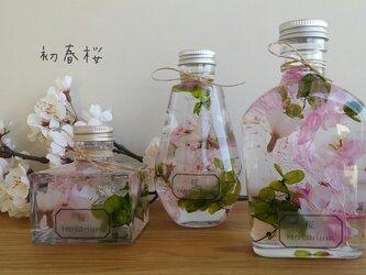 初春桜☆ ハーバリウム♬の画像