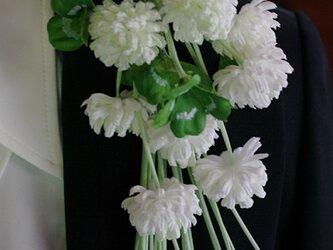 クローバーのお花8輪 F2の画像