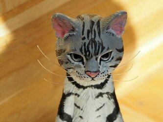 The Cat 200% 【アメリカンショートヘヤー】【送料無料】の画像