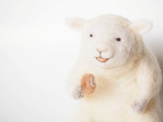 Donut Sheepの画像