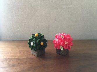 桜橘 (へ) 雛飾り の画像