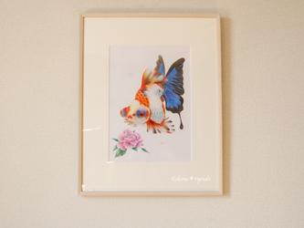 蝶尾-碧-の画像