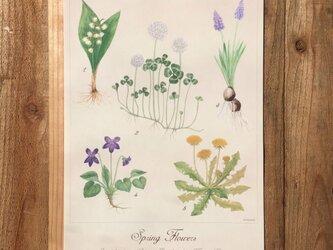 Spring flower Poster / 春の野花 植物画 ボタニカルアート ポスターの画像