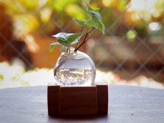 小さな吹きガラスの一輪挿し シマトネリコの木の画像