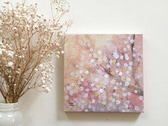春の18cm panel・白い梅の画像