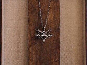 蝶蜻蛉(チョウトンボ)の画像