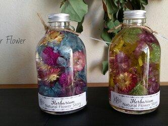 カラフルフラワーのハーバリウム 花色♬の画像