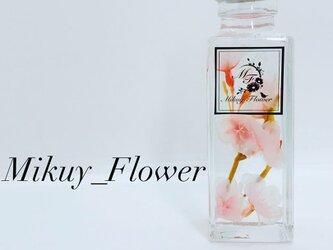和の最高級ハーバリウム〜Cherry blossom〜の画像