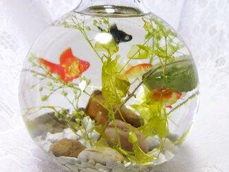 金魚鉢の中で泳ぐ金魚たちの画像