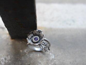 anemone ringの画像