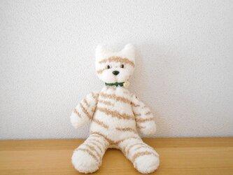 虎猫ソックキャットの画像