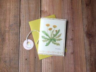 greeting card / タンポポ Dandelion グリーティングカード 植物画の画像