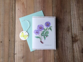 greeting card / クリスマスローズ Christmasrose グリーティングカード 植物画の画像