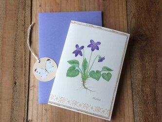 greeting card / すみれ Violet グリーティングカード 植物画の画像