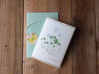 greeting card / しろつめ草・四葉のクローバー Clover  グリーティングカード 植物画の画像