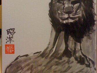 百獣の王 ライオンの画像