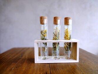 植物標本 Botanical Collection■フレームボックス入りガラス管■ミモザ 3品種セットの画像