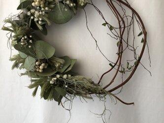 ユーカリとウーリーブッシュの枝見せリースの画像