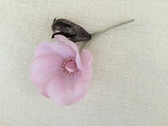 ピンクのポピーの画像
