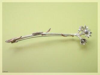 野のラグワートと幼虫  ブローチ ペンダント(Wild Fleawort with Baby)の画像