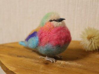 小鳥 *karafuru*の画像