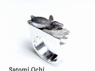 フンボルトペンギンのリングの画像