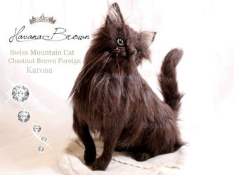 猫 ネコ『ハバナブラウン』入手困難 艶毛 羊毛フェルト Lサイズの画像