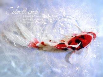 錦鯉 泳ぐ宝石 縁起物 羊毛フェルト 鯉 魚の画像