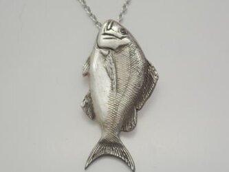 リアル真鯛ペンダントLの画像