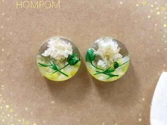 19p001・菜の花畑のピアス ホムポムの画像