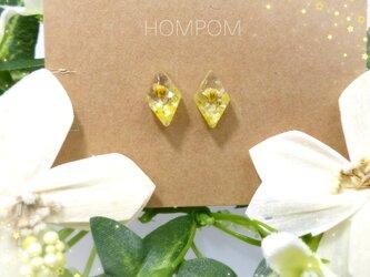 19p002・菜の花畑の小さなひし形ピアス ホムポムの画像