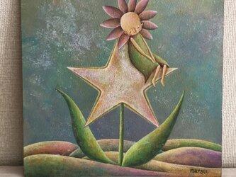 星の花の画像