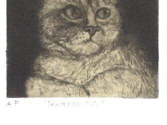 猫のポストカードの画像