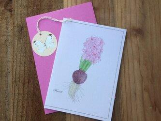 greeting card / ヒヤシンス Hyacinth  グリーティングカード 植物画の画像