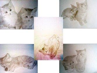 「にゃんこセット5枚組」 ほっこり癒しのイラストポストカードの画像