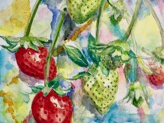 水彩画 『苺』の画像