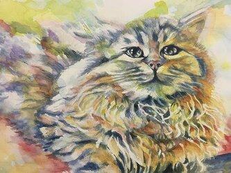 水彩 『猫』の画像