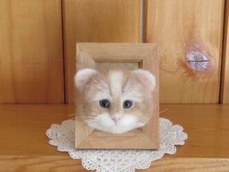 スコティッシュフォールドロングヘアーの子猫 フレーム の画像