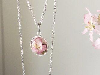 本物の桜を閉じ込めたネックレス(正面バージョン)の画像