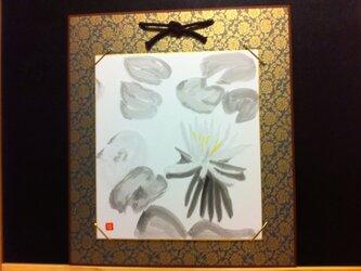 水面に浮かぶ蓮の花の画像
