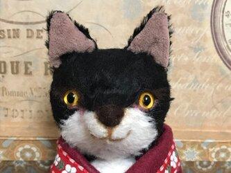 ビスコースの白黒猫 セサミの画像