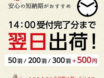 お急ぎ 翌日出荷!(50羽 / 200羽 / 300羽)の画像