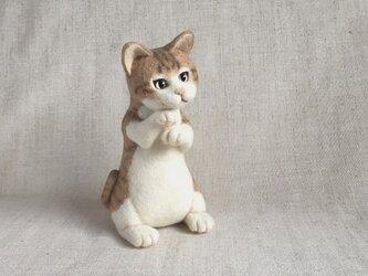 ◆おねだりネコさんの画像